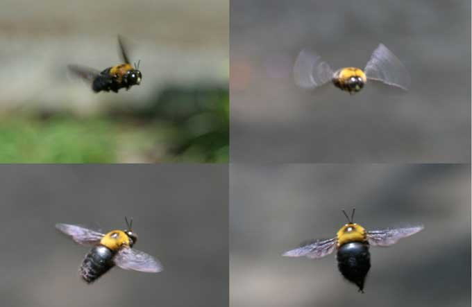 abeille017.jpg